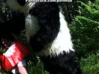 小的紅色騎馬兜帽他媽的與熊貓在樹林裡