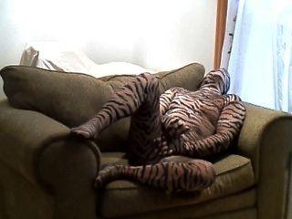 角質硬的老虎跳動,當在一把大椅子時