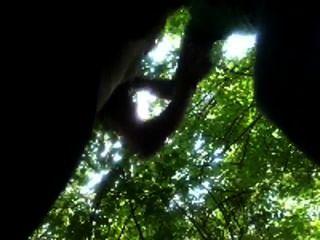 業餘的人吸掉學院花花公子在公園樹林裡