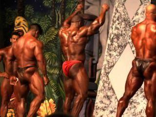 muscbull daniel:競爭對手沒有10 ifbb pro dallas europa 2014