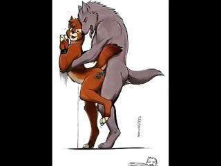 同性戀毛茸的狼