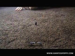 巨人罌粟,視頻1