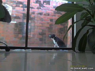 他媽的我毛茸茸的貓redxxxcams.com